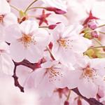 中国語の「花」について